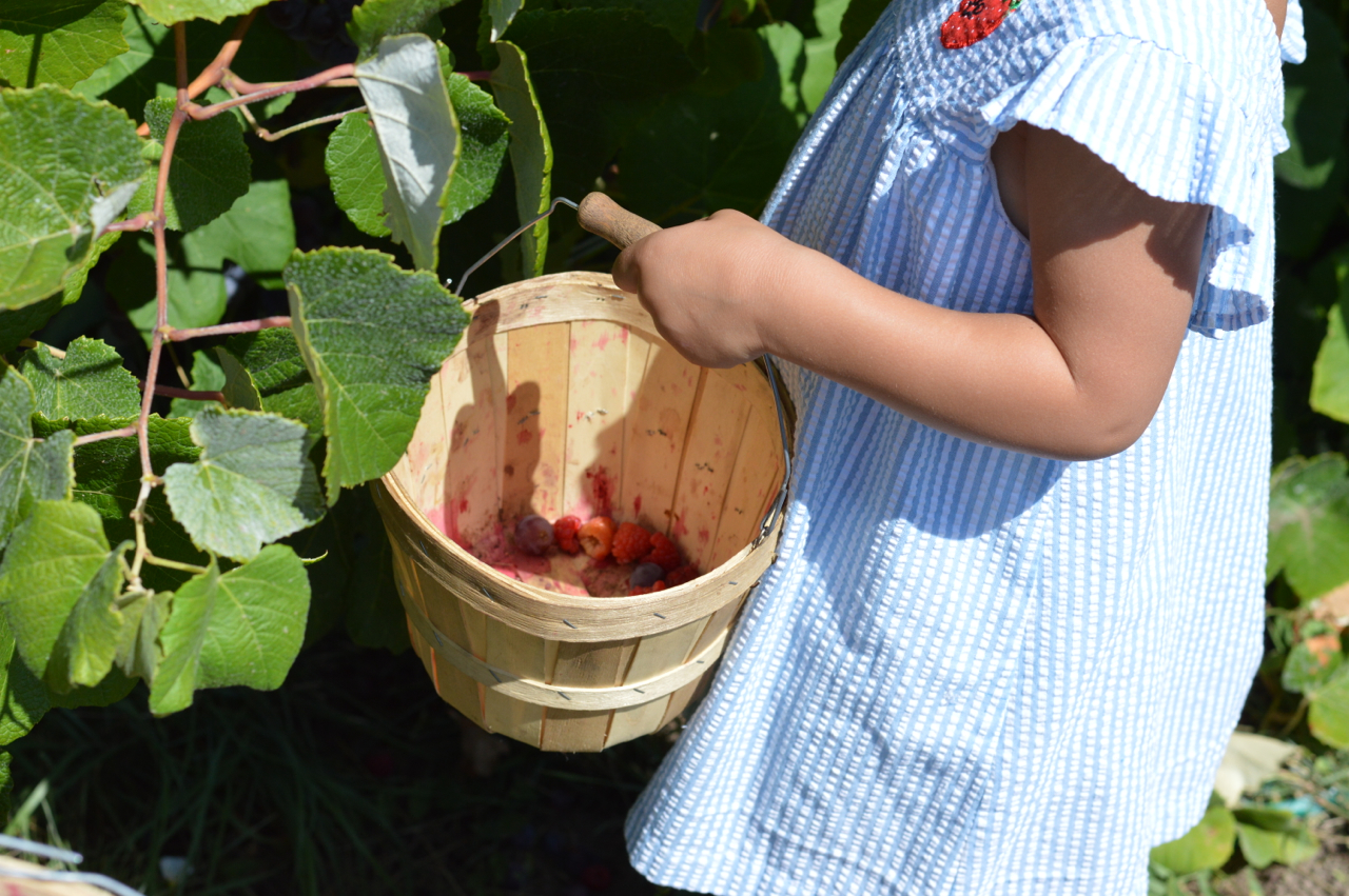 Fruit-Picking-at-Delicious-Orchards-17.jpg