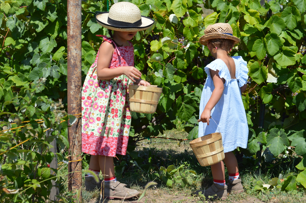 Fruit-Picking-at-Delicious-Orchards-21.jpg