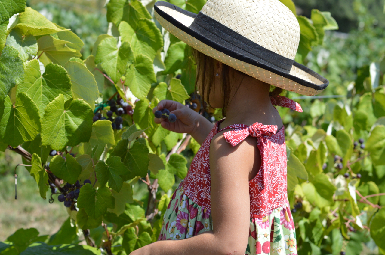 Fruit-Picking-at-Delicious-Orchards-25.jpg