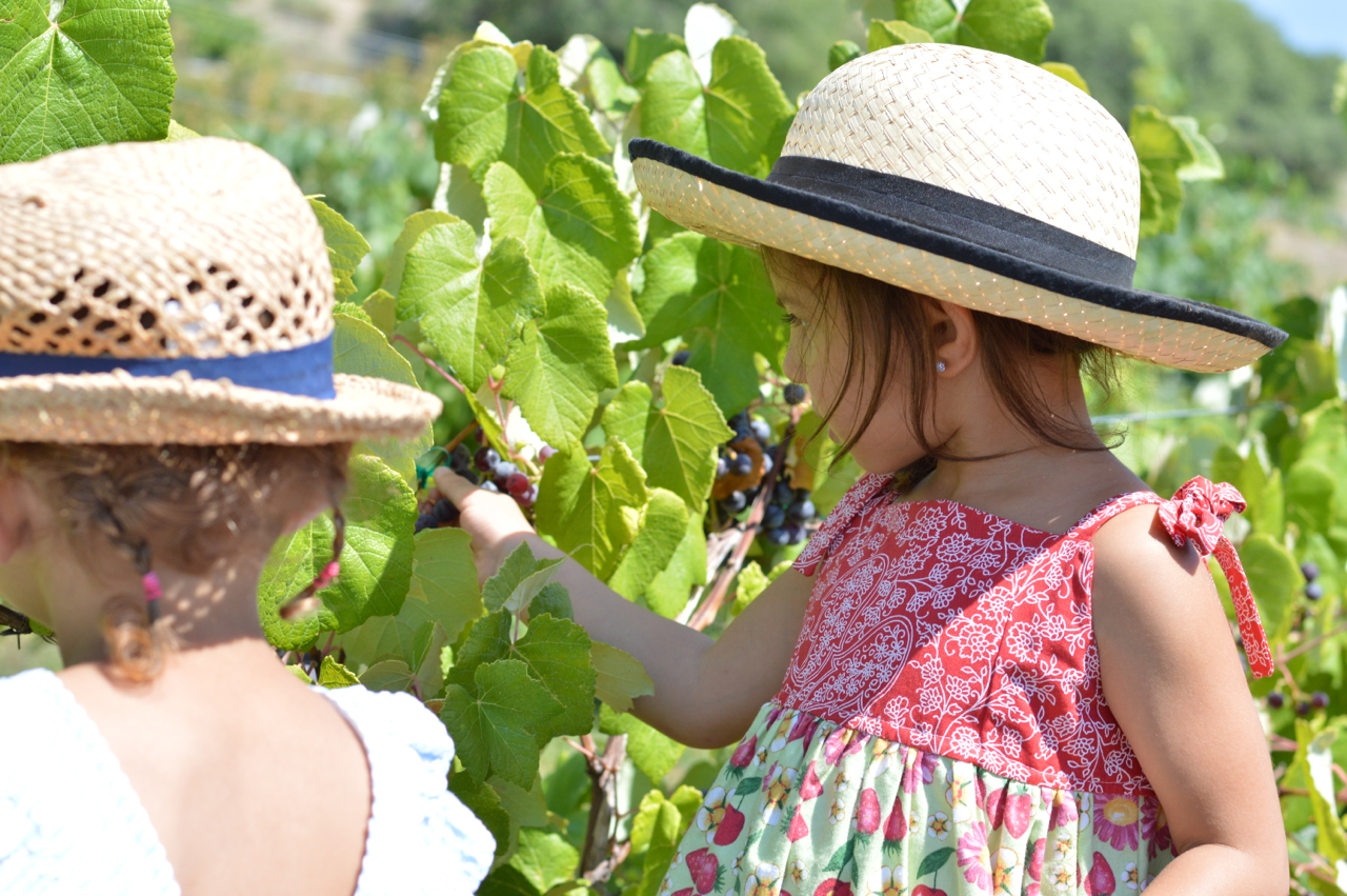 Fruit-Picking-at-Delicious-Orchards-28.jpg
