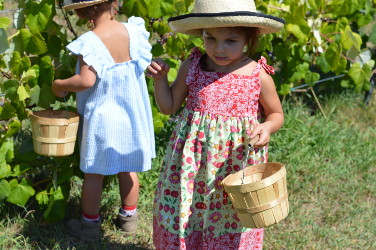 Fruit-Picking-at-Delicious-Orchards-29.jpg