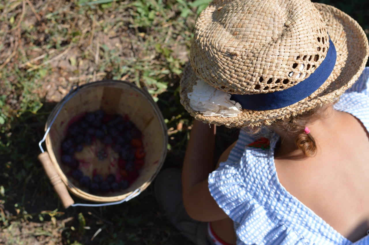 Fruit-Picking-at-Delicious-Orchards-35.jpg