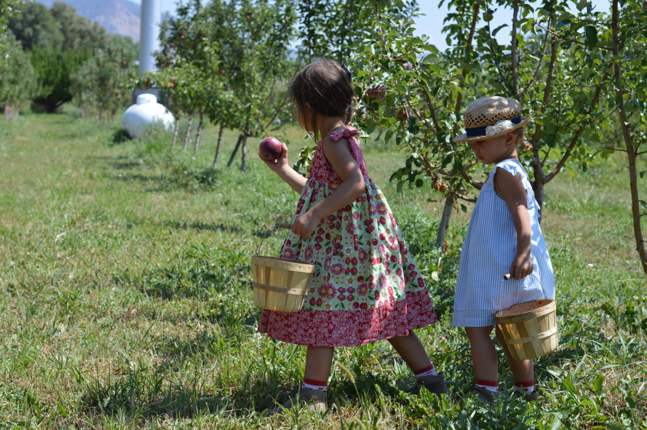Fruit-Picking-at-Delicious-Orchards-38.jpg