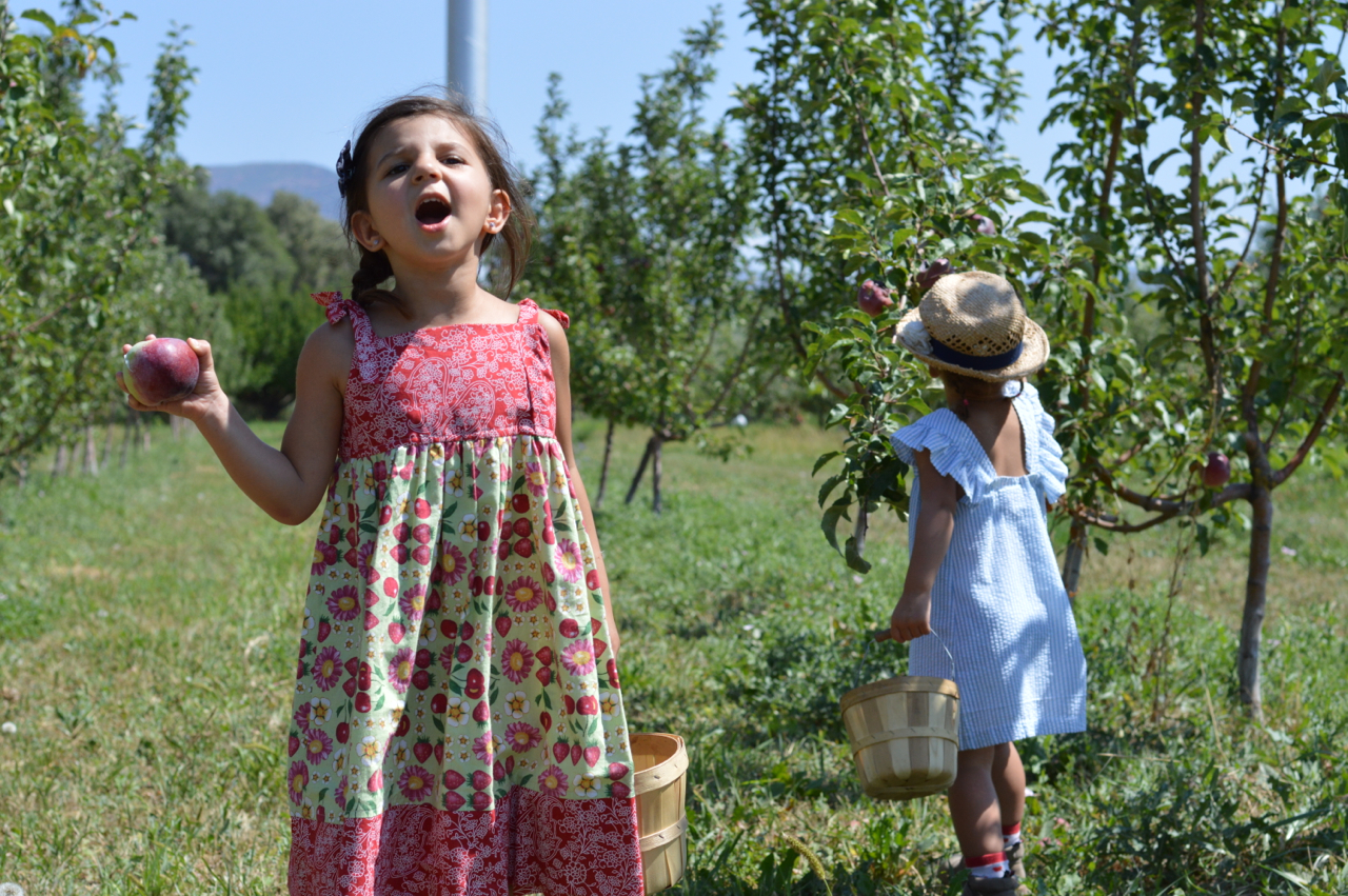 Fruit-Picking-at-Delicious-Orchards-39.jpg