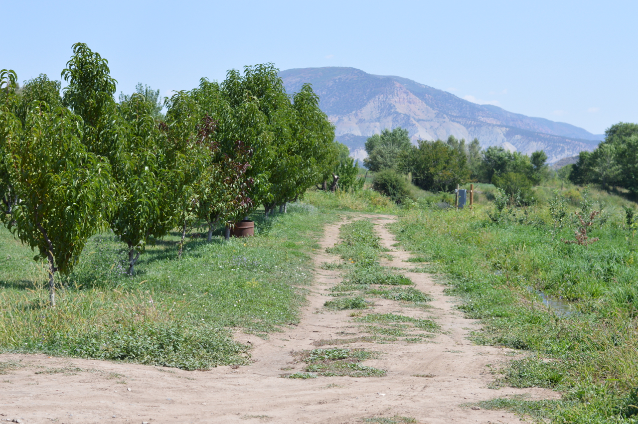 Fruit-Picking-at-Delicious-Orchards-41.jpg