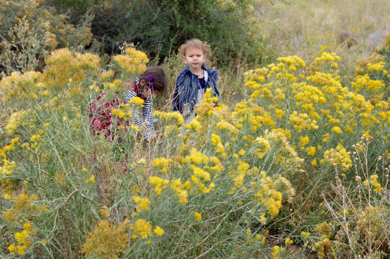 Nature-Walk-with-Toddlers-in-Colorado-21.jpg