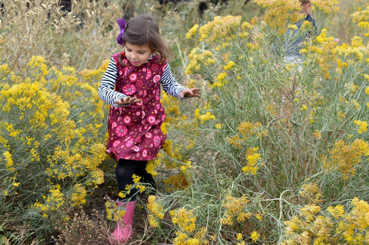 Nature-Walk-with-Toddlers-in-Colorado-22.jpg