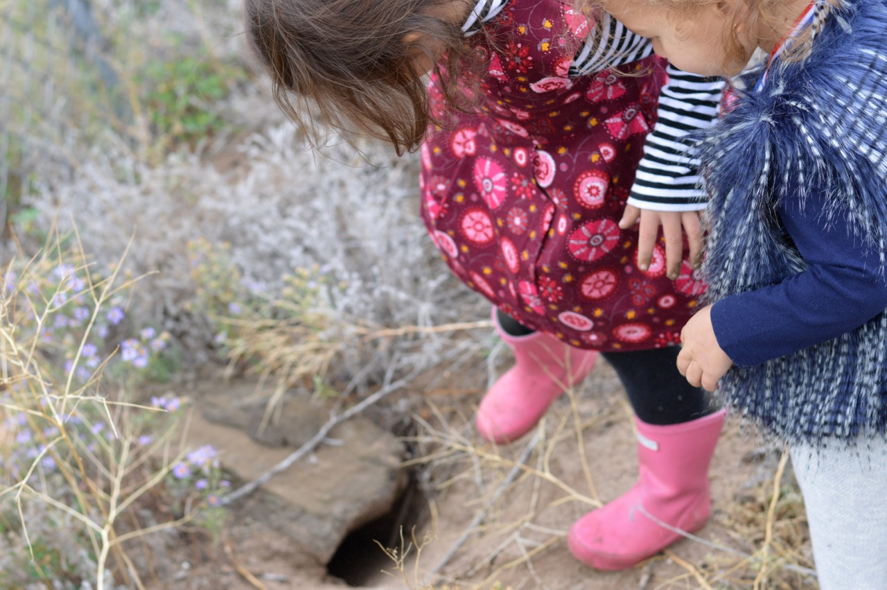 Nature-Walk-with-Toddlers-in-Colorado-24.jpg