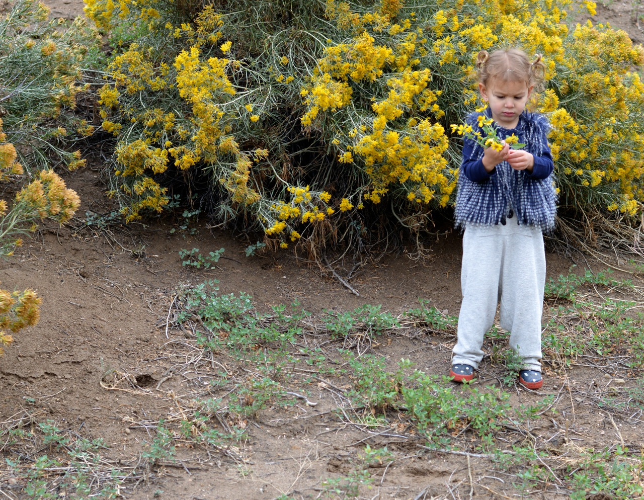 Nature-Walk-with-Toddlers-in-Colorado-31.jpg