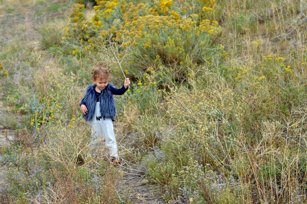 Nature-Walk-with-Toddlers-in-Colorado-58.jpg