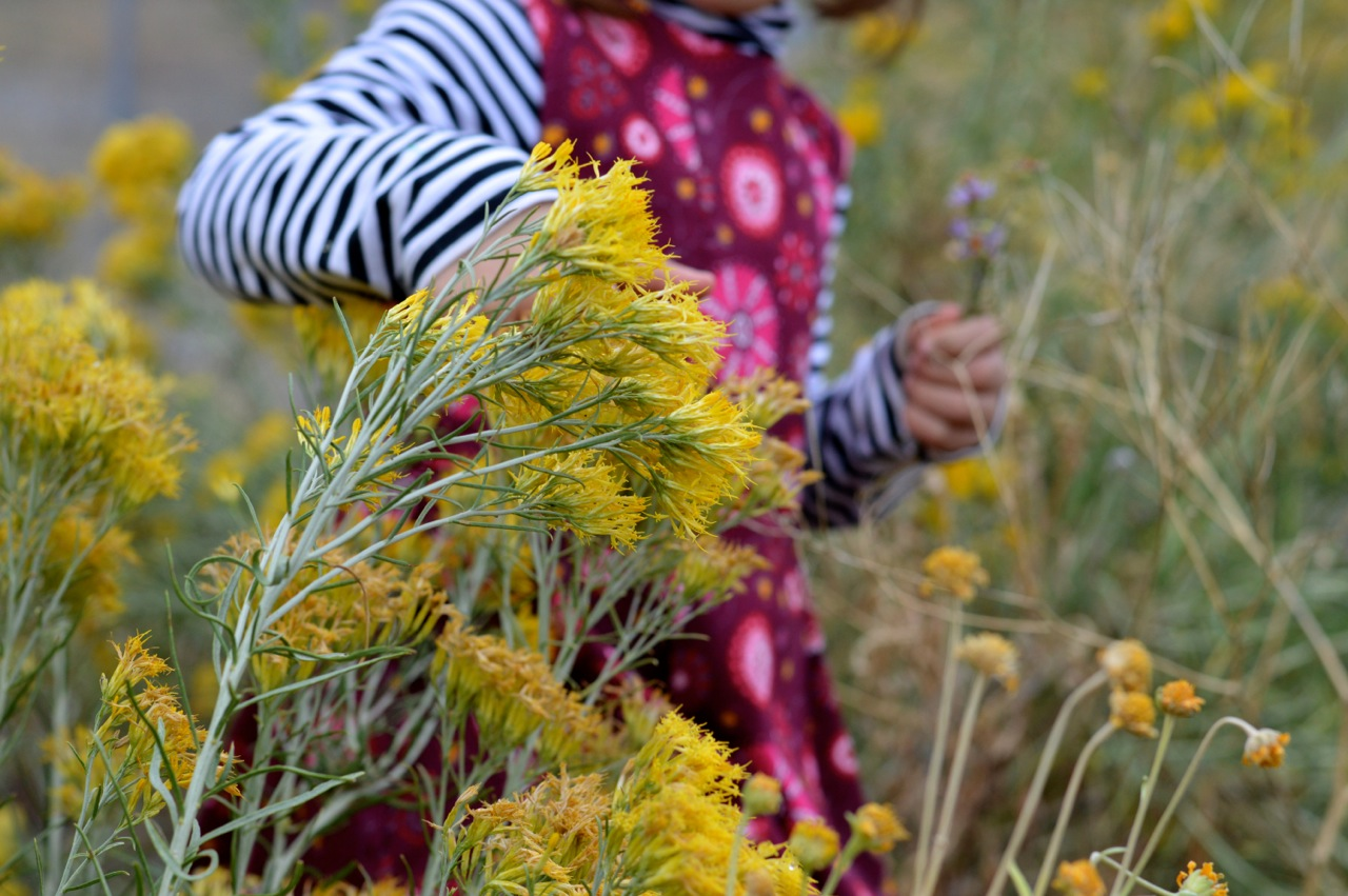 Nature-Walk-with-Toddlers-in-Colorado-60.jpg
