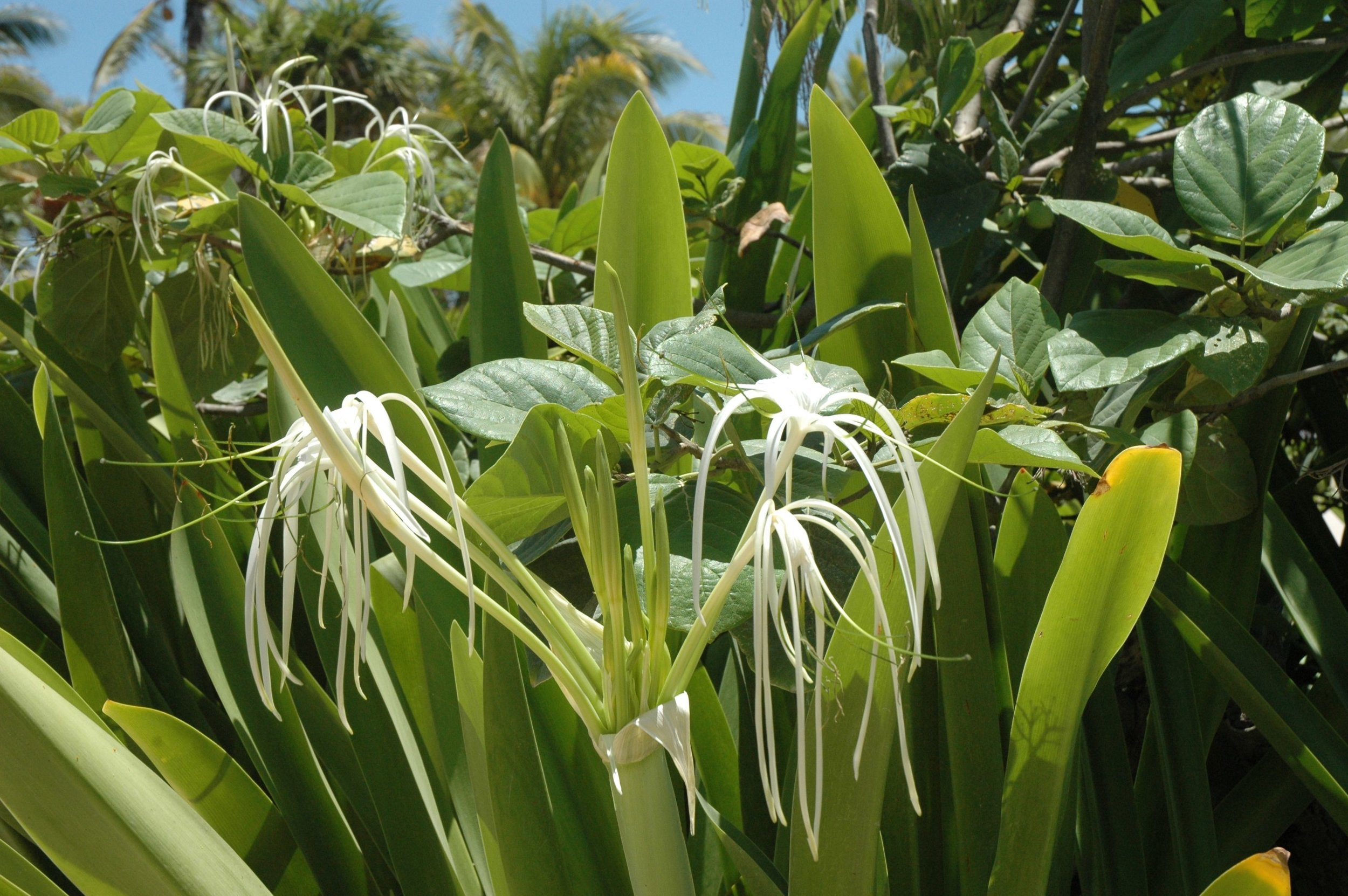 bm tulum white flowers