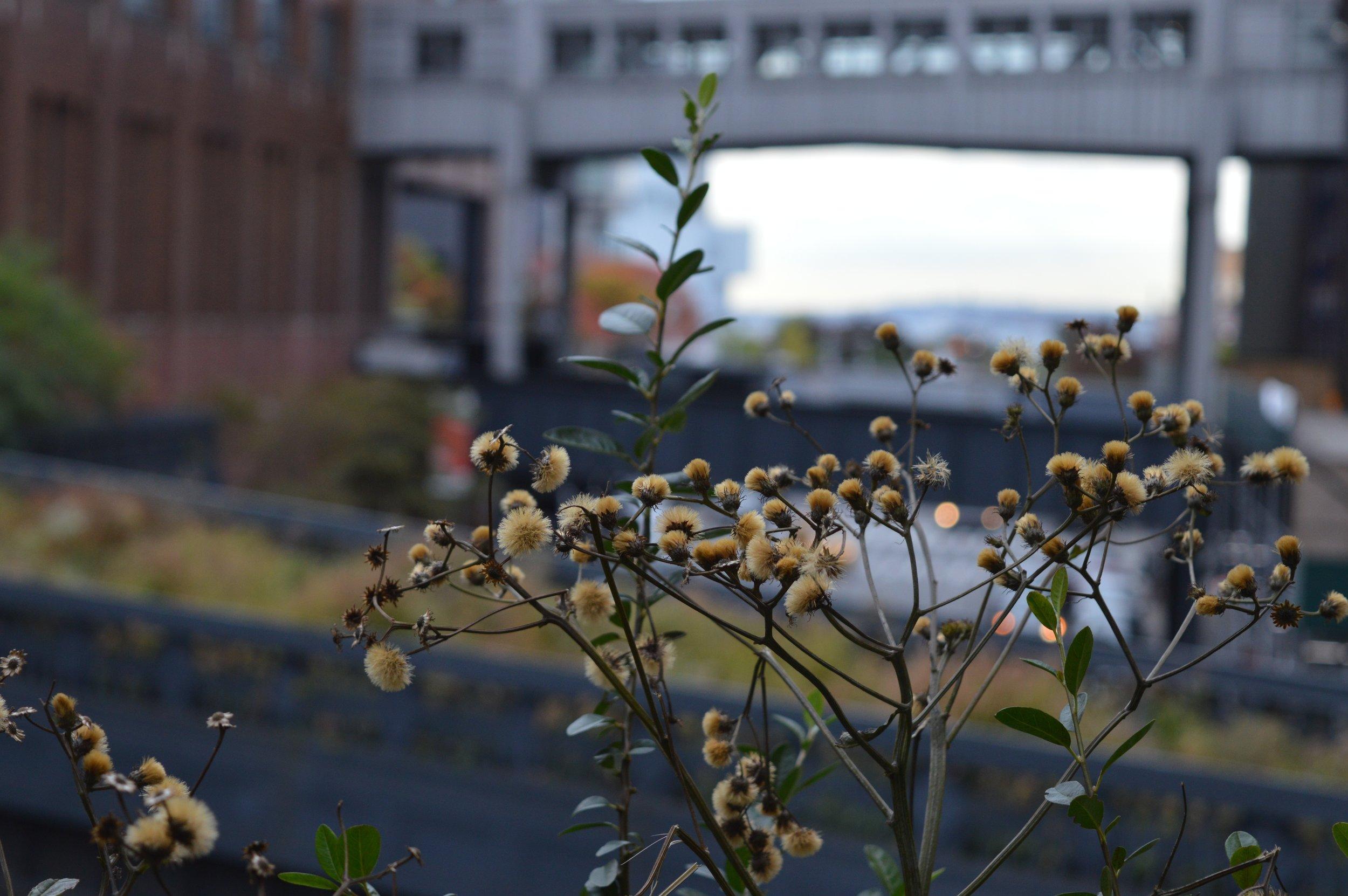 New YOrk City in October 2017 High Line 1.jpg