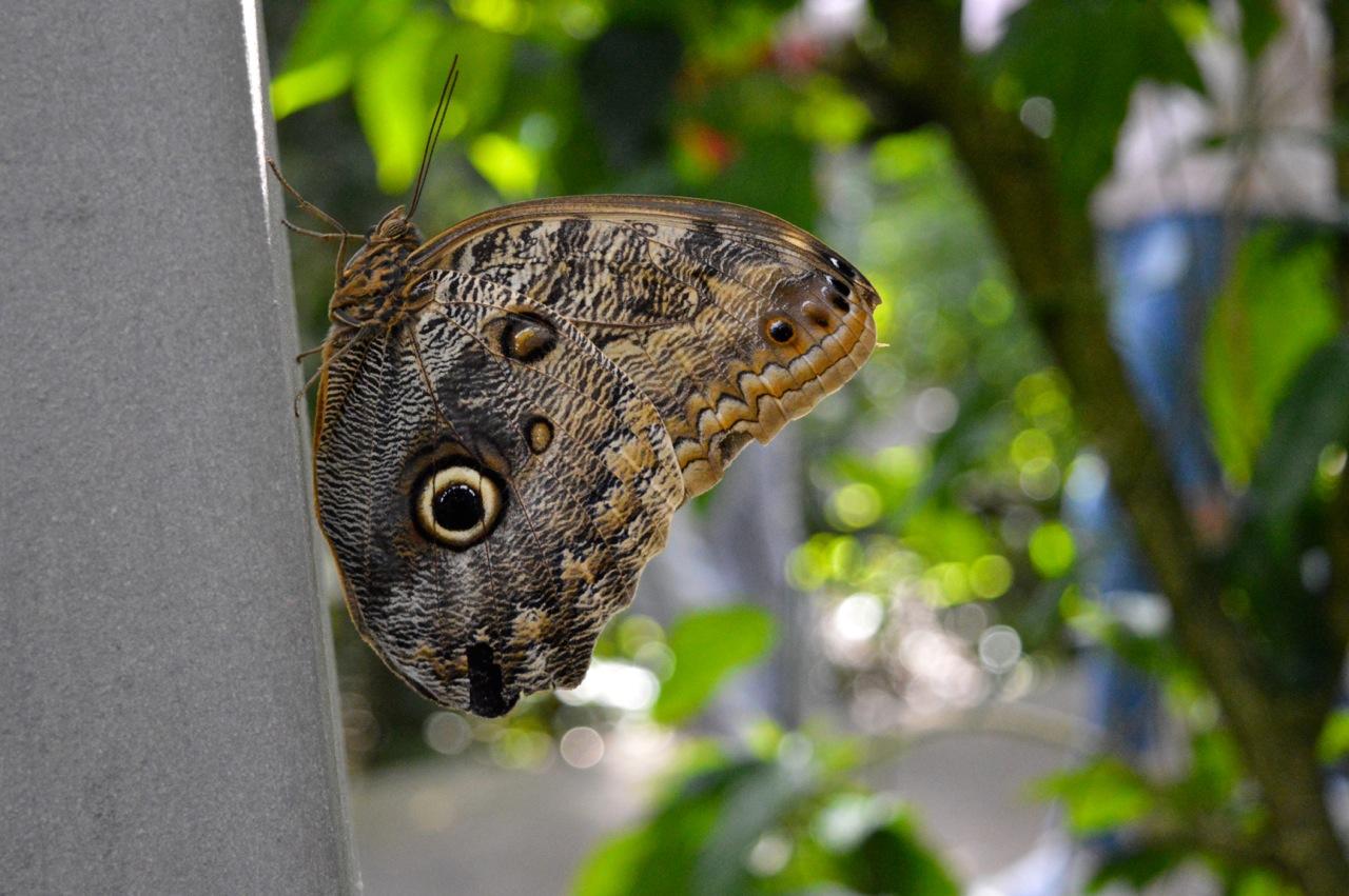 Butterfly Pavilion Westminster Colorado Spring 2018 4.jpg