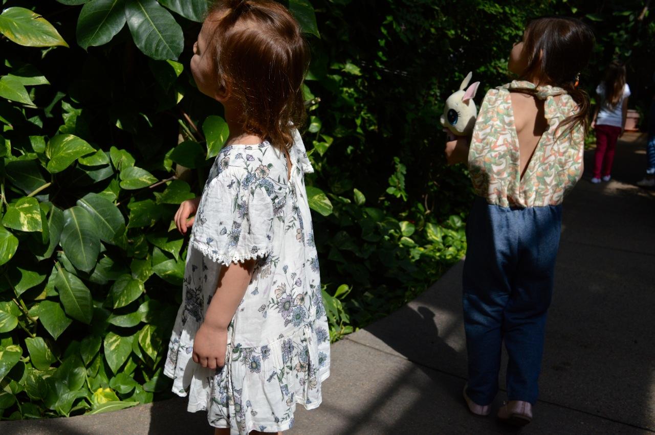 Butterfly Pavilion Westminster Colorado Spring 2018 11.jpg