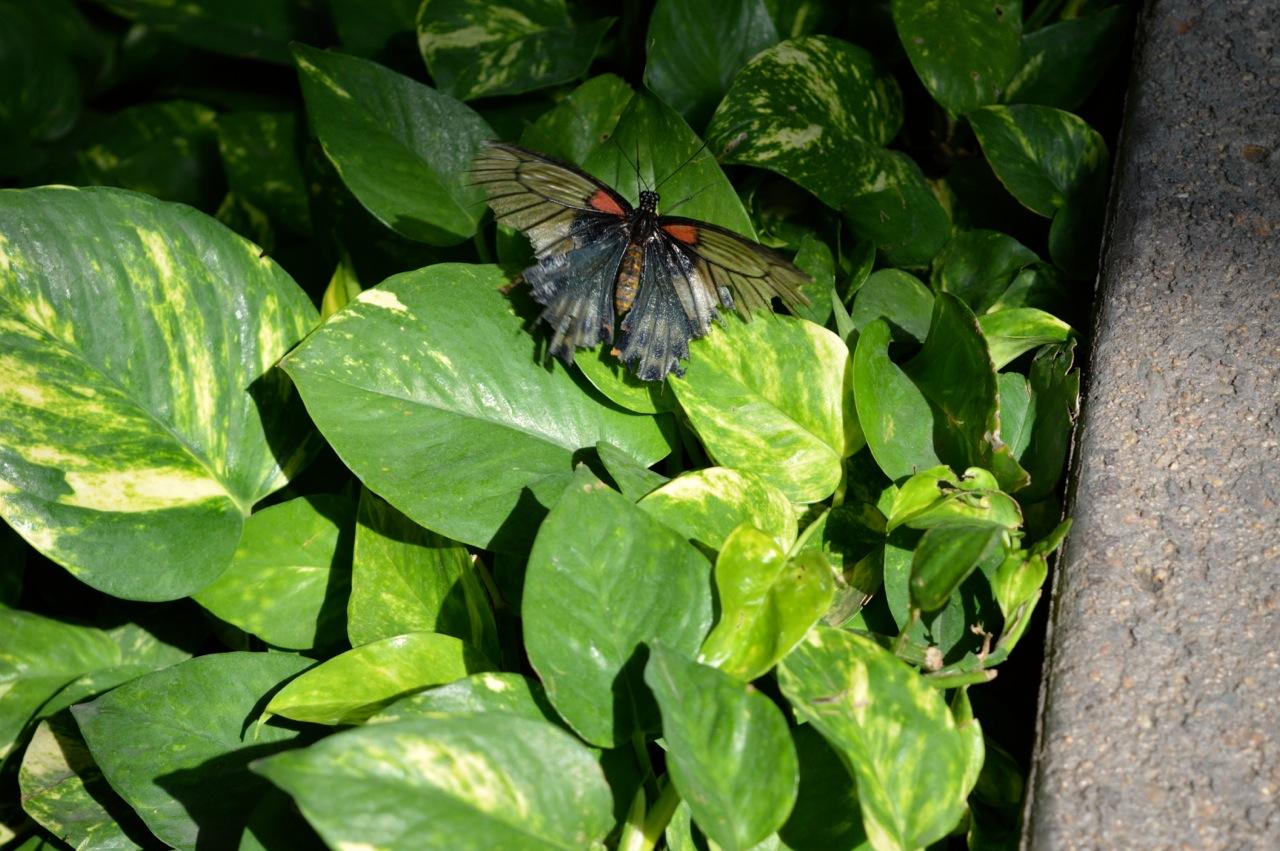 Butterfly Pavilion Westminster Colorado Spring 2018 13.jpg