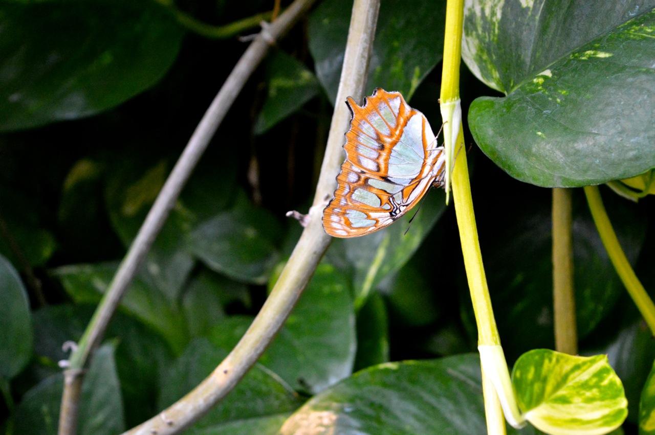 Butterfly Pavilion Westminster Colorado Spring 2018 17.jpg