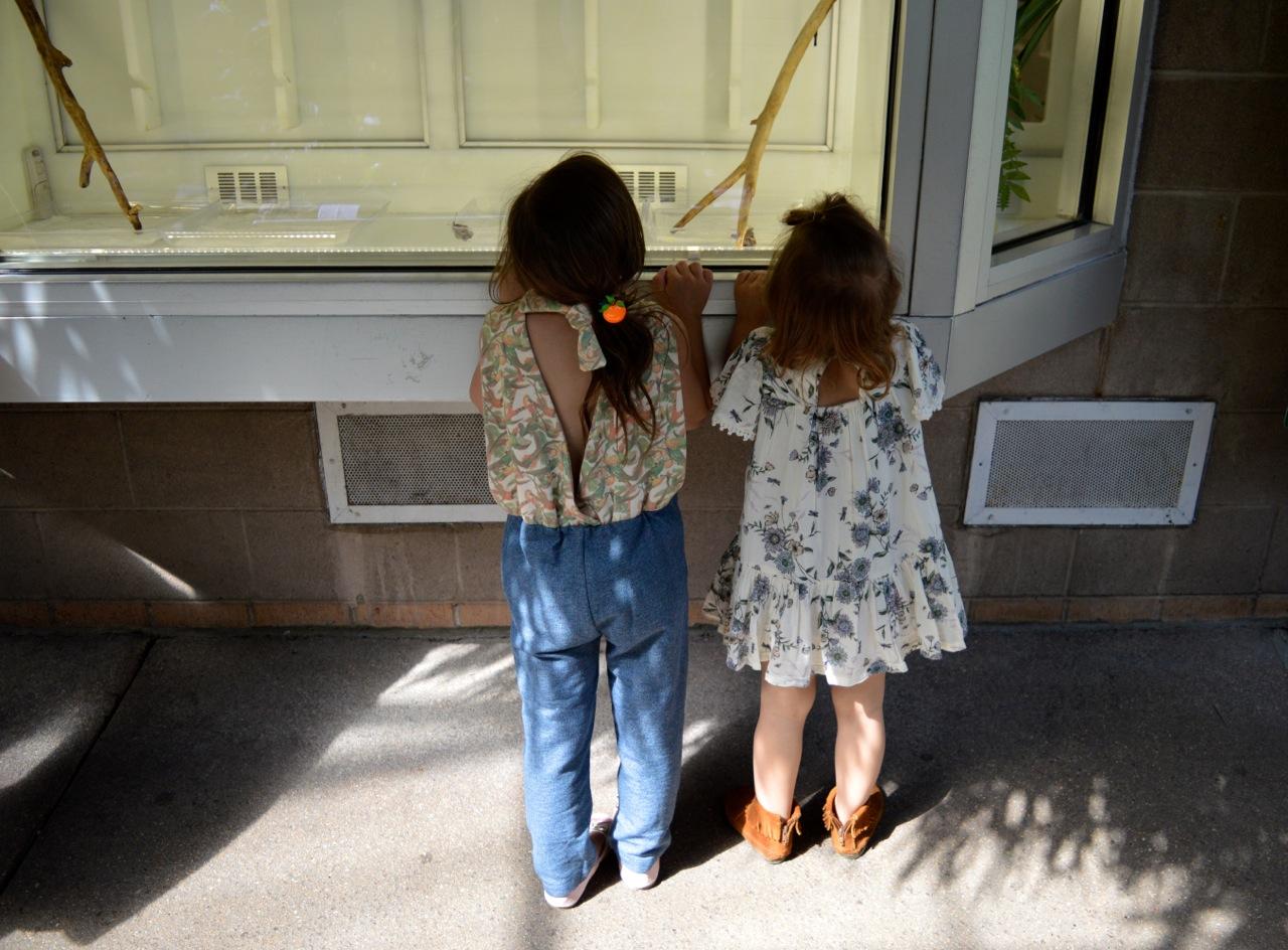 Butterfly Pavilion Westminster Colorado Spring 2018 36.jpg