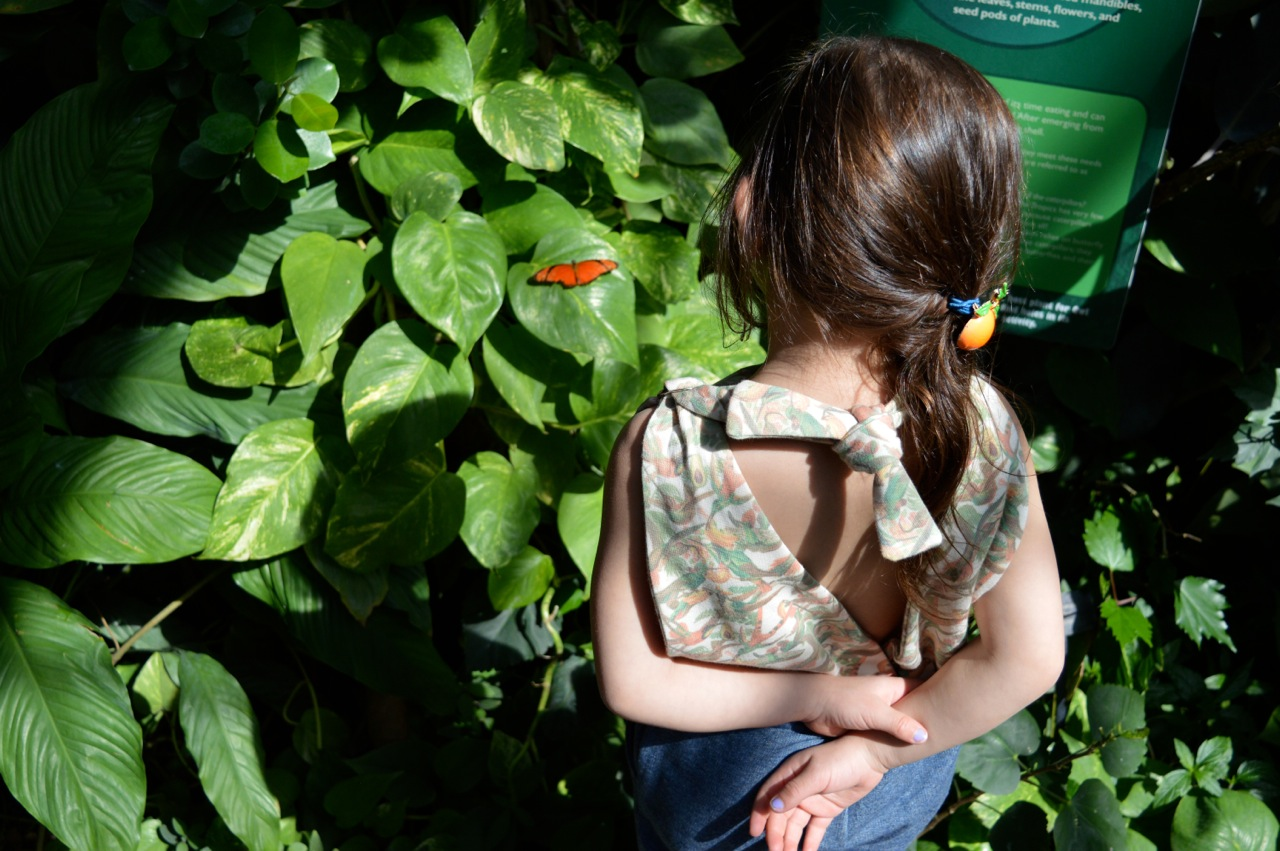 Butterfly Pavilion Westminster Colorado Spring 2018 39.jpg