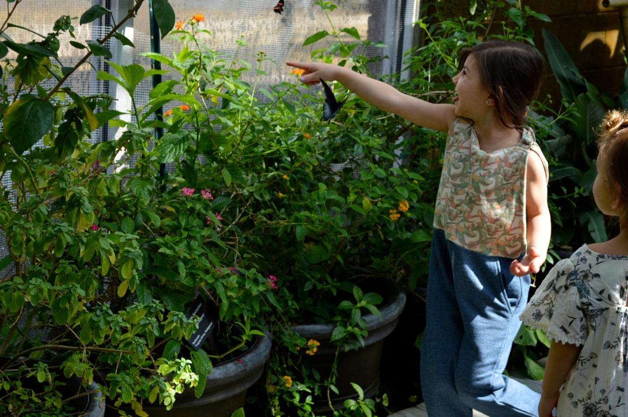Butterfly Pavilion Westminster Colorado Spring 2018 41.jpg