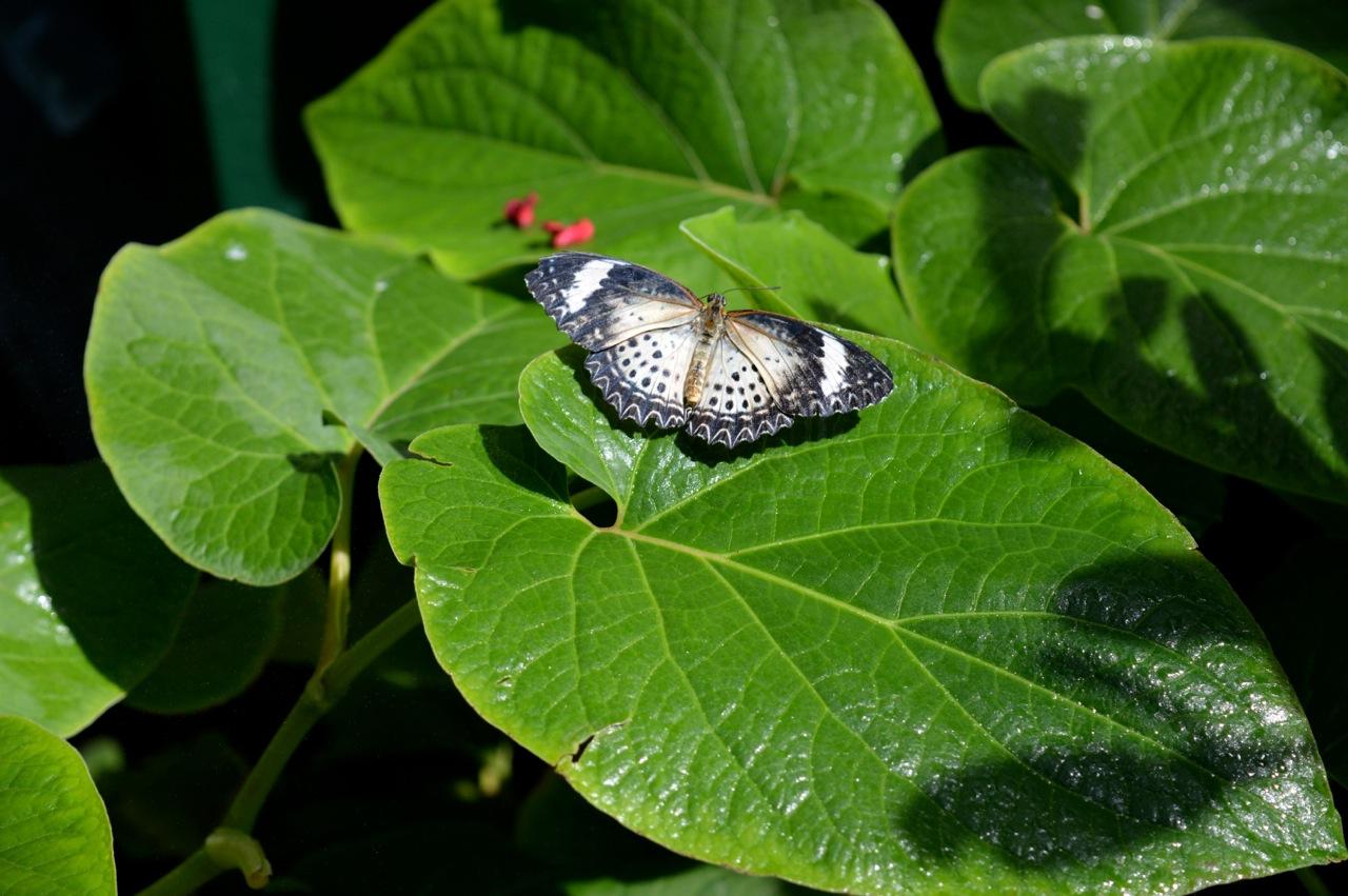 Butterfly Pavilion Westminster Colorado Spring 2018 46.jpg