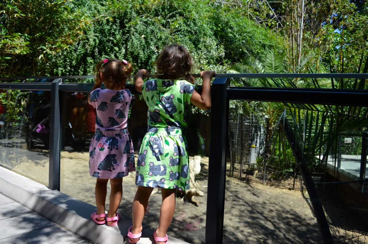 San Diego Zoo July 2018 5.jpg