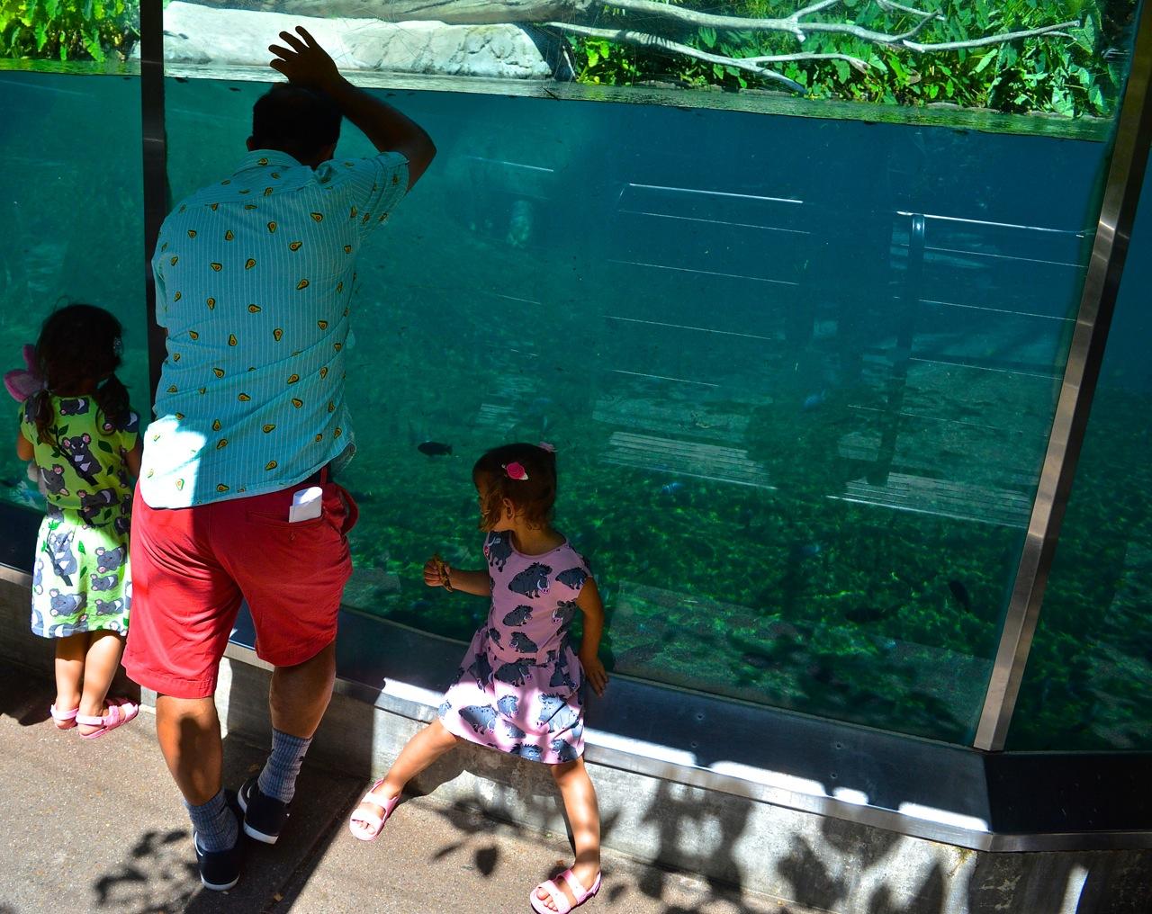 San Diego Zoo July 2018 17.jpg