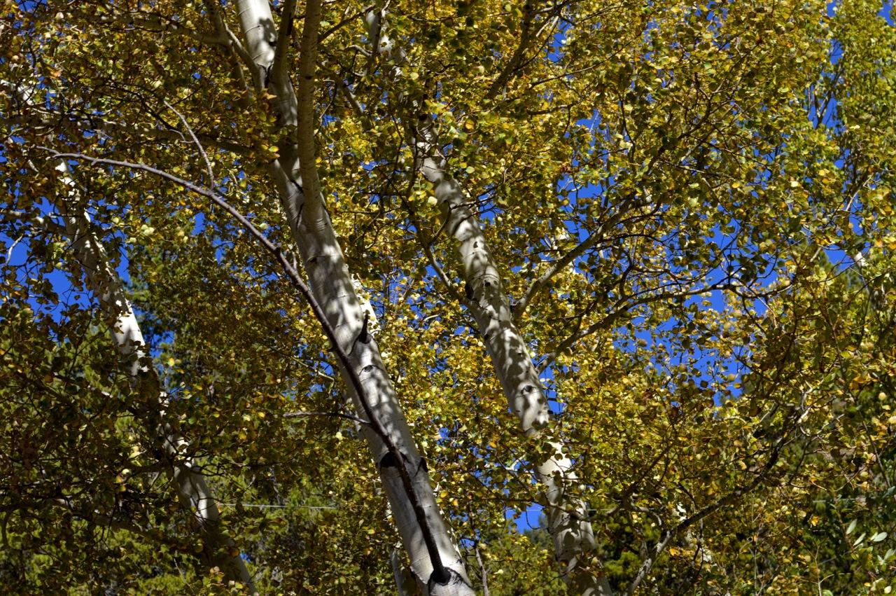 Fall leaf peeping in Colorado 2.jpg