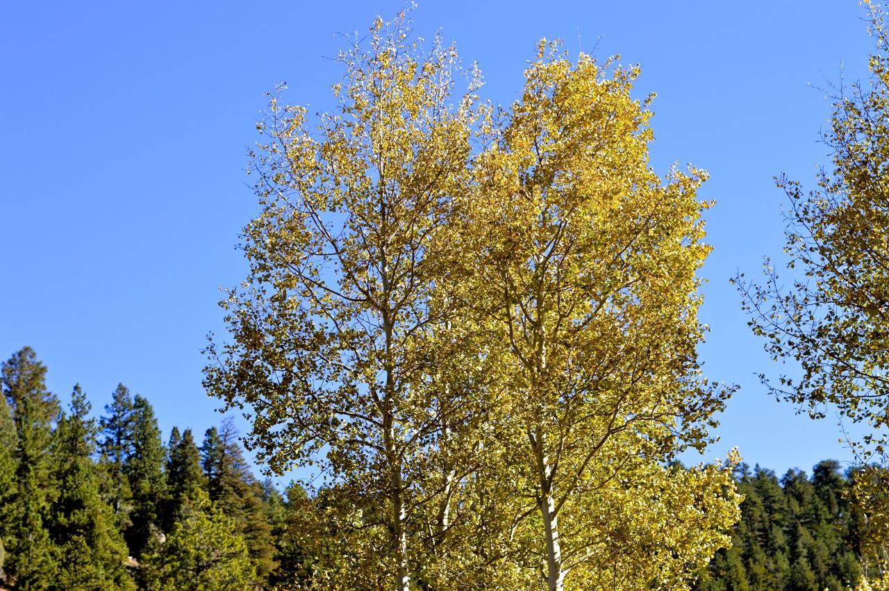 Fall leaf peeping in Colorado 3.jpg