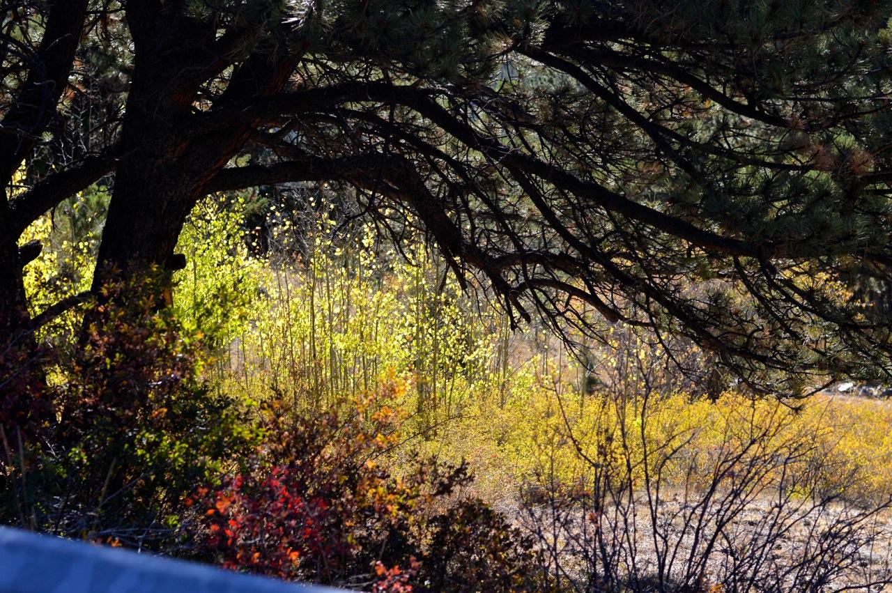 Fall leaf peeping in Colorado 4.jpg