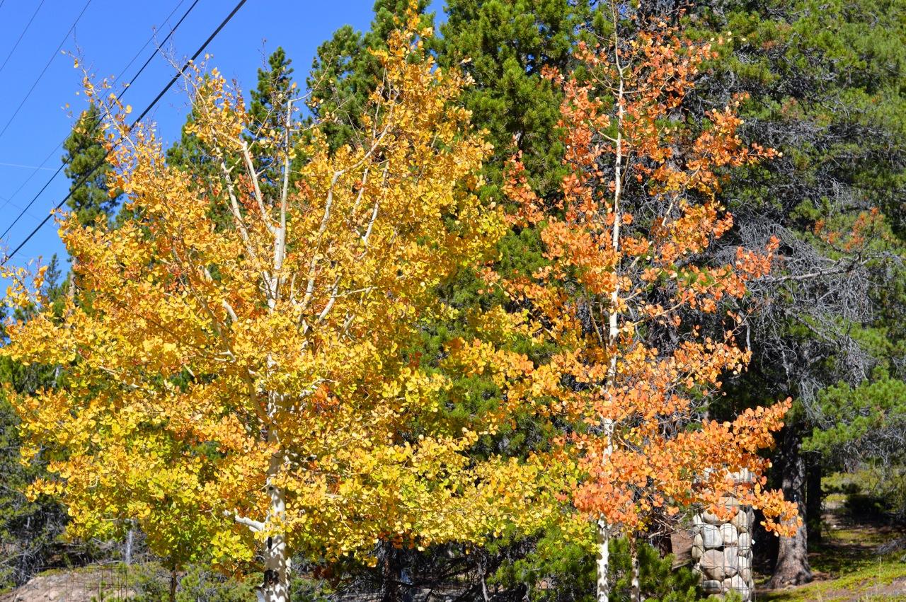 Fall leaf peeping in Colorado 5.jpg