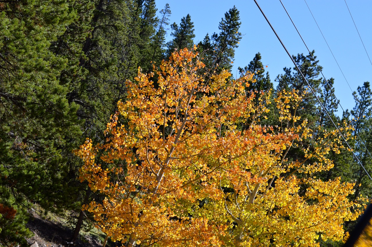 Fall leaf peeping in Colorado 6.jpg