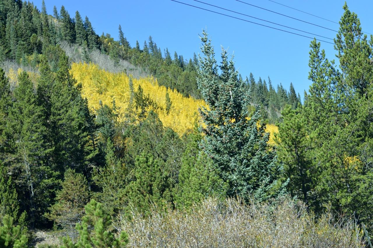 Fall leaf peeping in Colorado 7.jpg