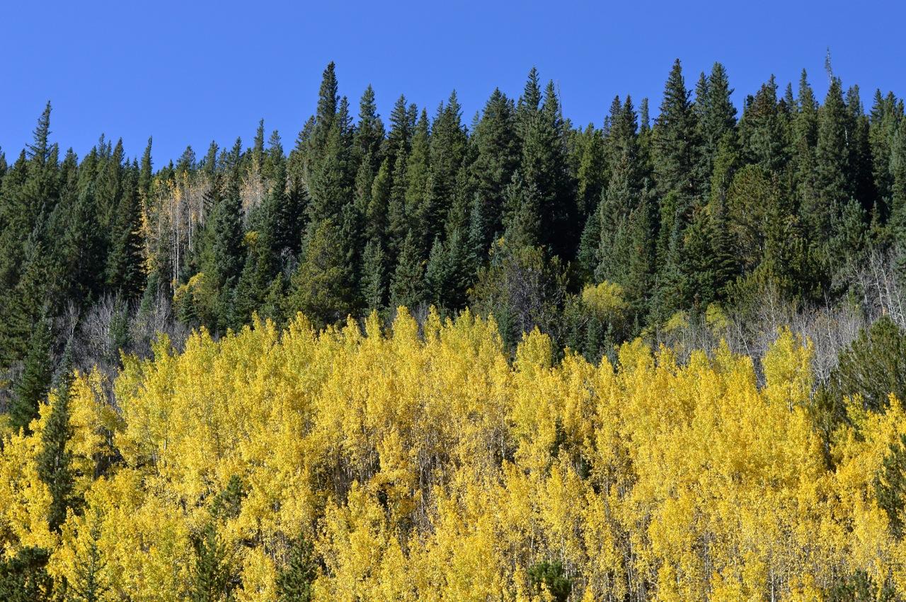 Fall leaf peeping in Colorado 8.jpg