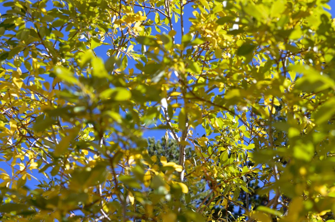 Fall leaf peeping in Colorado 11.jpg