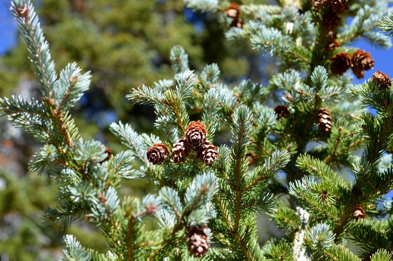 Fall leaf peeping in Colorado 23.jpg