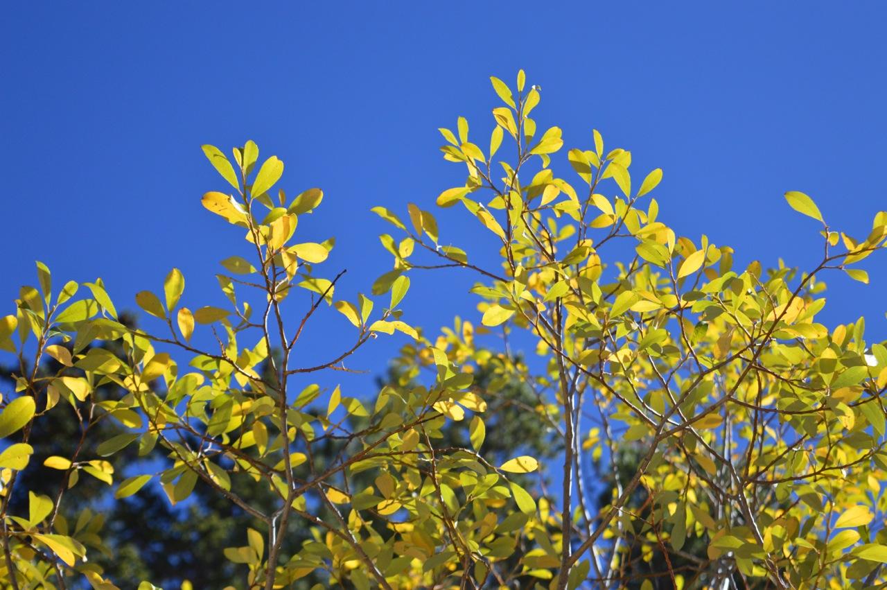Fall leaf peeping in Colorado 77.jpg