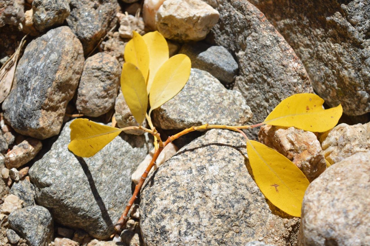 Fall leaf peeping in Colorado 76.jpg