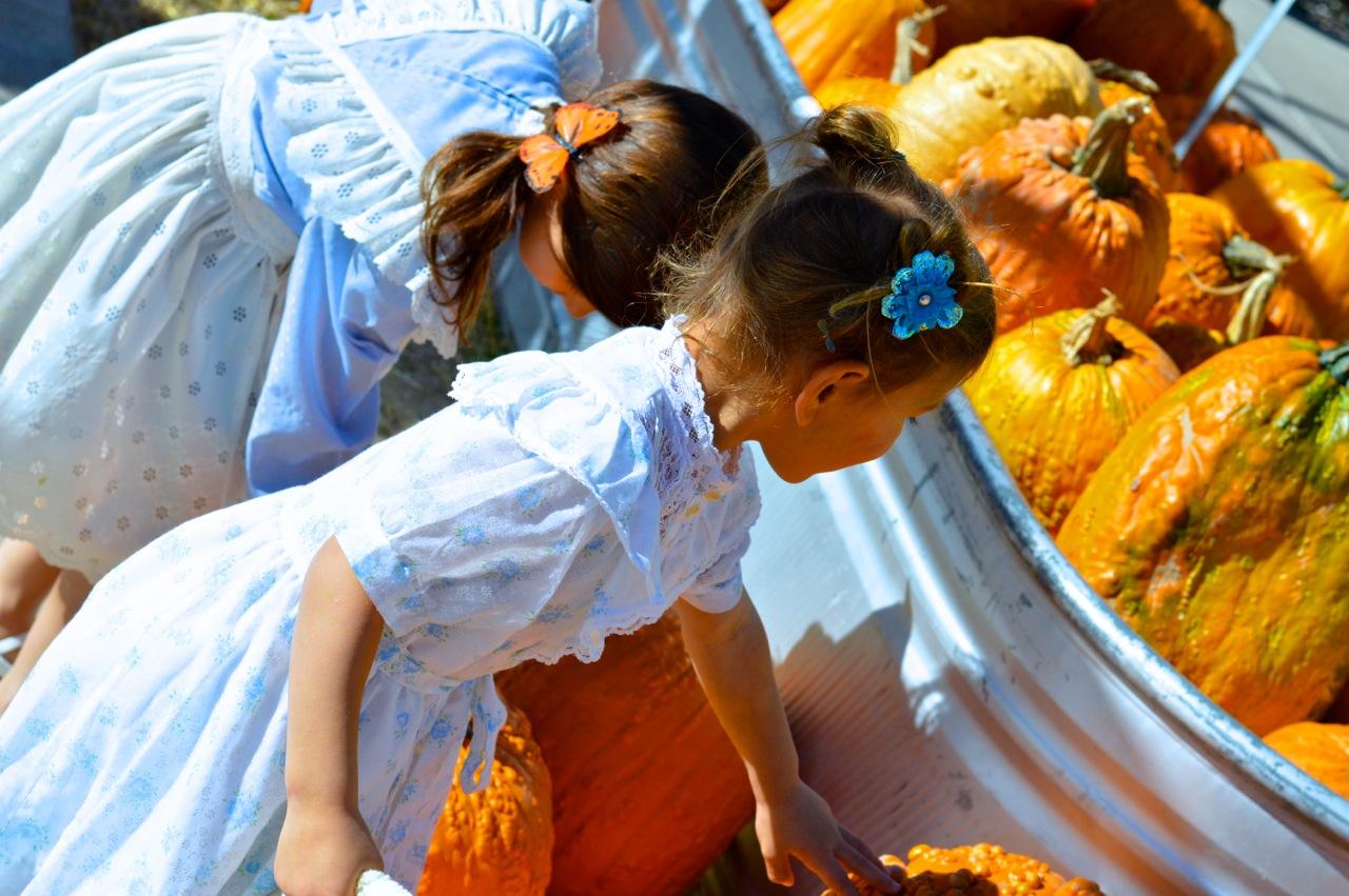 Fall Fest Nick's Garden Center Aurora 8.jpg