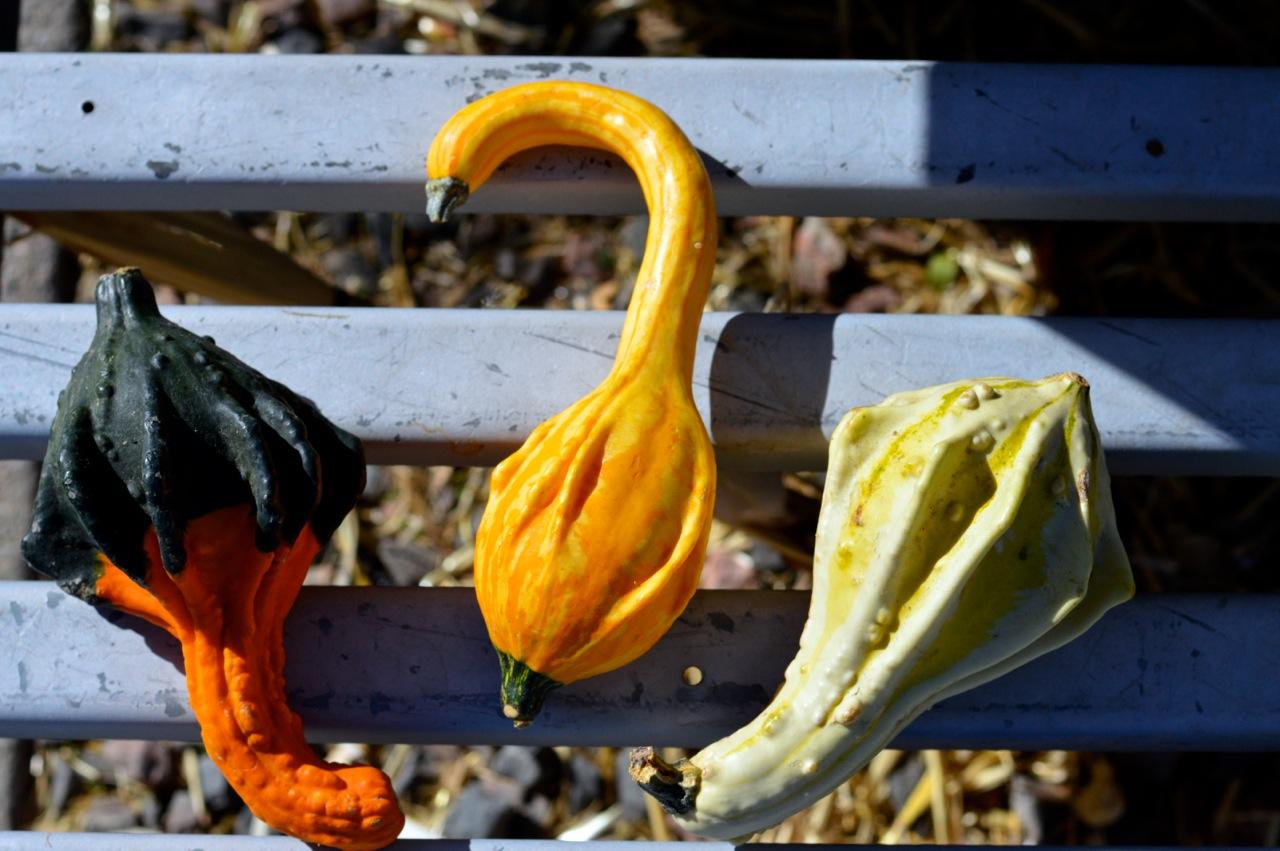 Fall Fest Nick's Garden Center Aurora 40.jpg