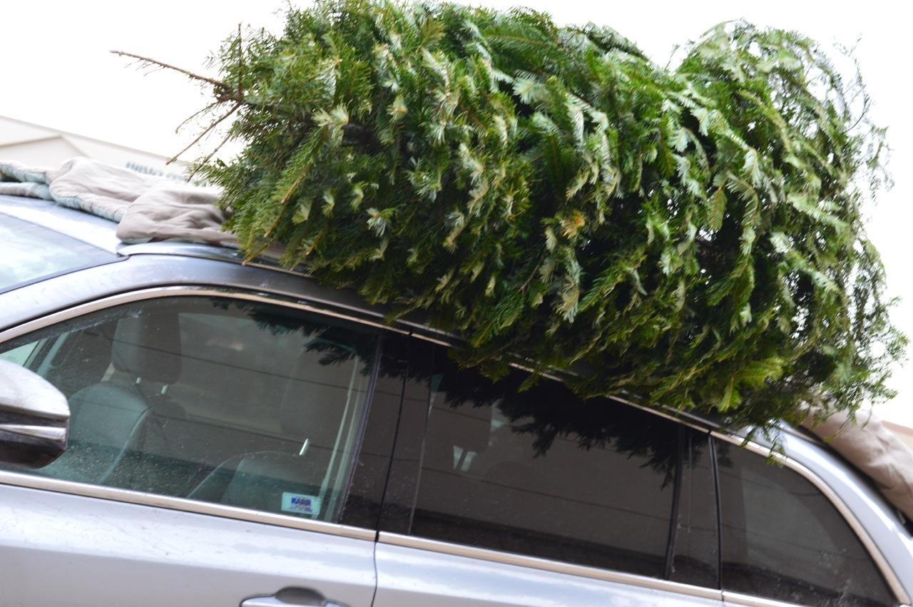 Christmas Tree Picking 2018 6.jpg
