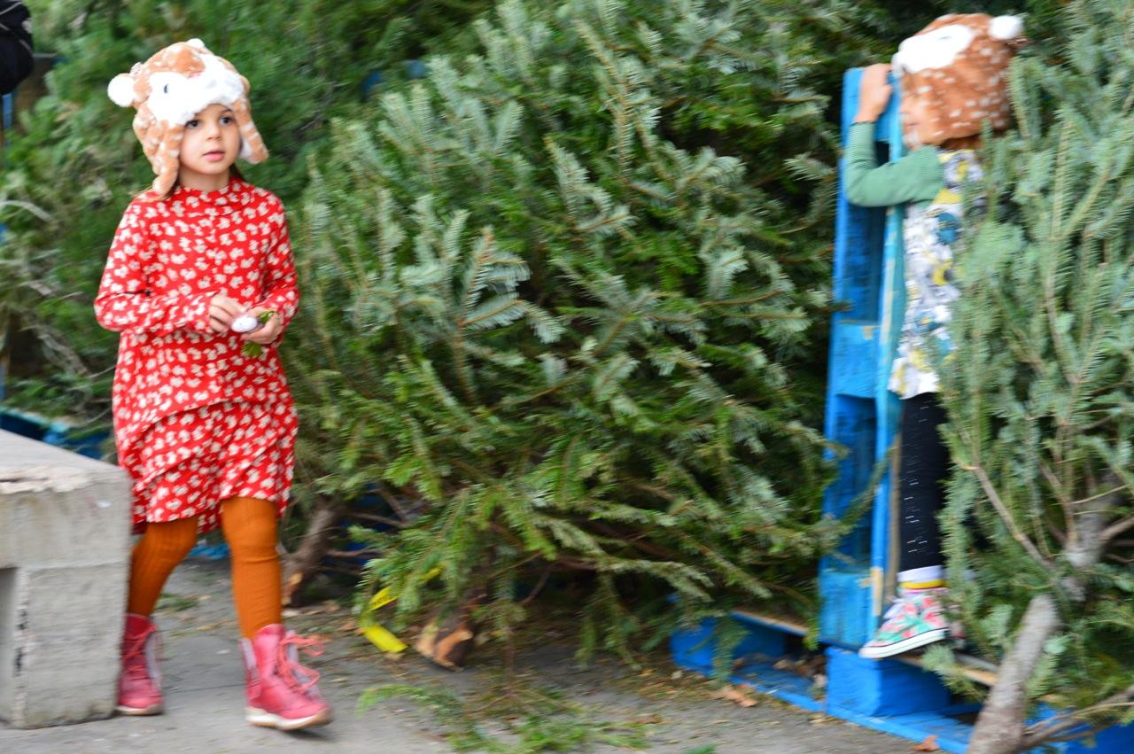 Christmas Tree Picking 2018 15.jpg