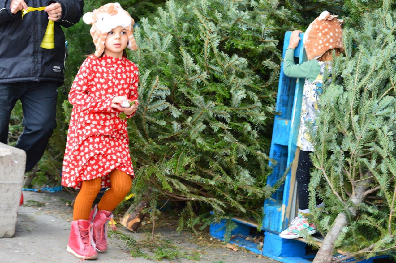 Christmas Tree Picking 2018 16.jpg