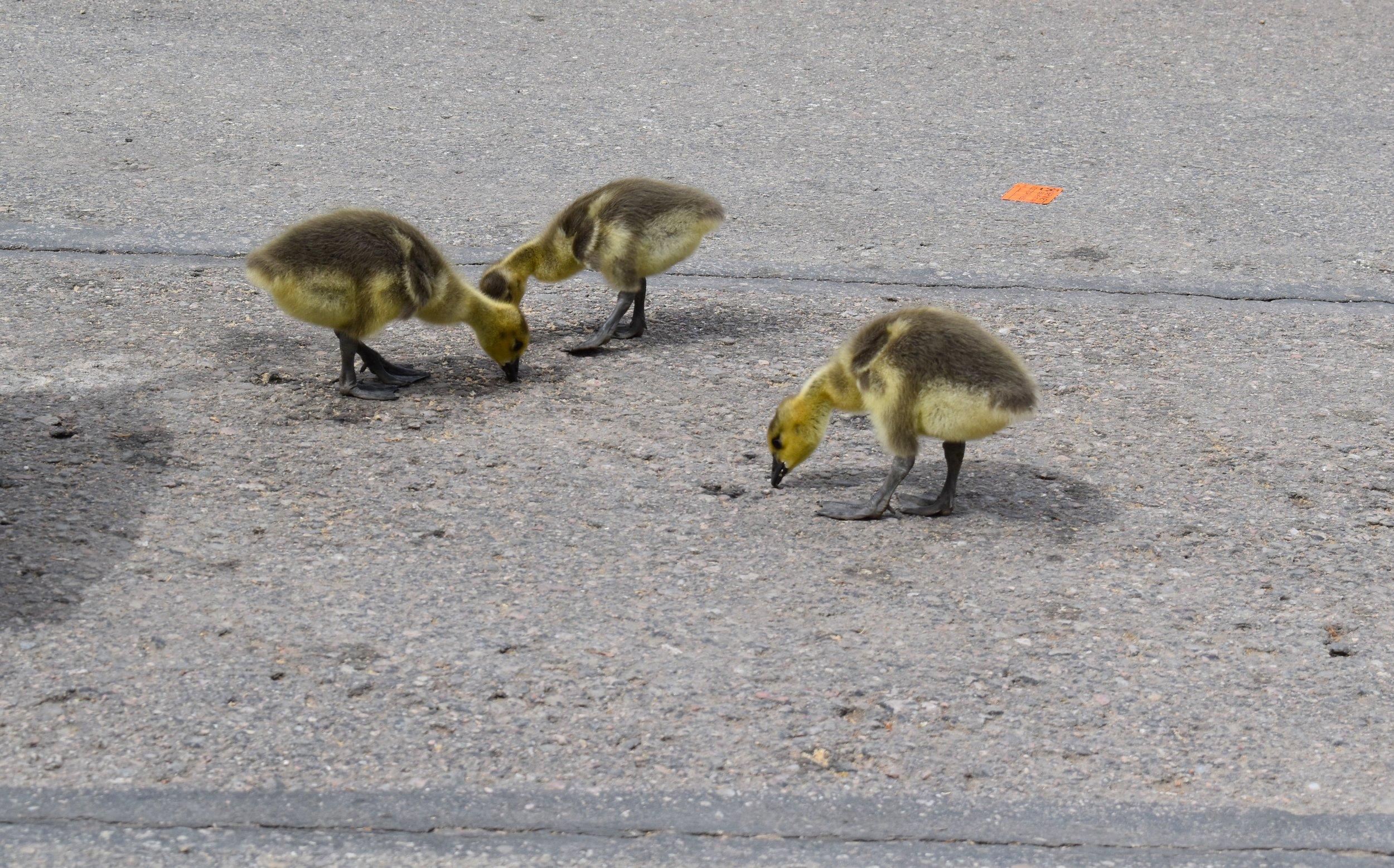 Denver Zoo day 8.jpg