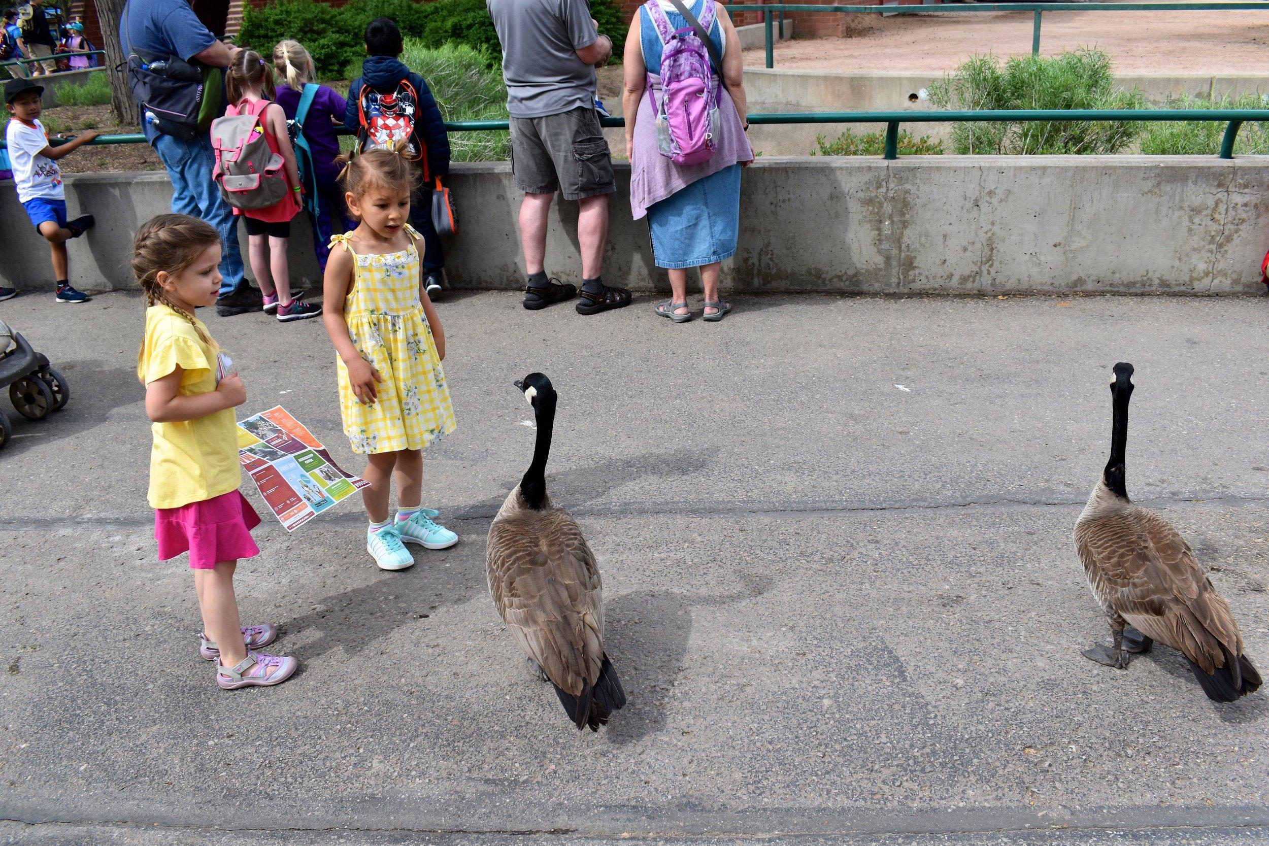 Denver Zoo day 6.jpg