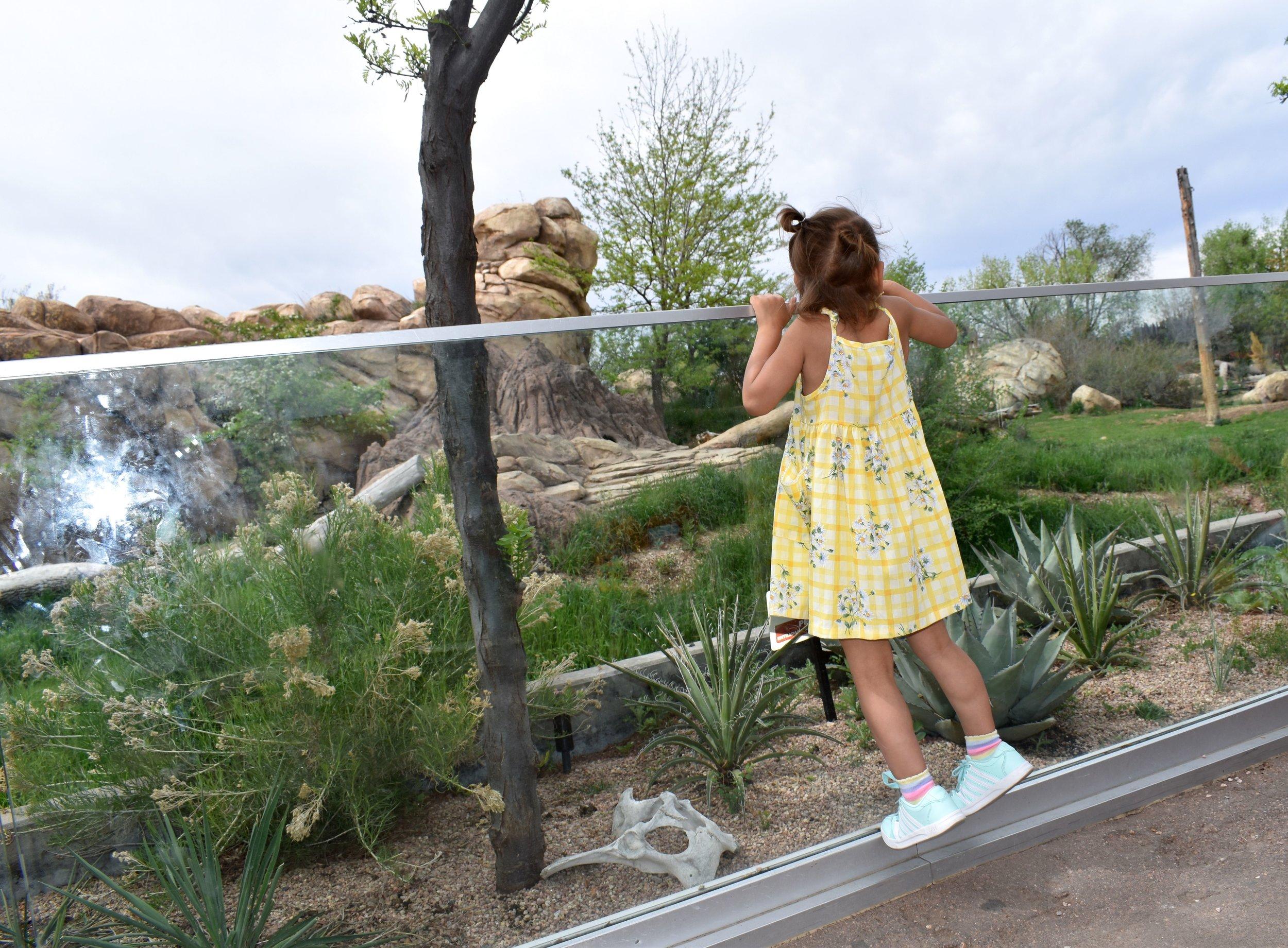 Denver Zoo day 9.jpg
