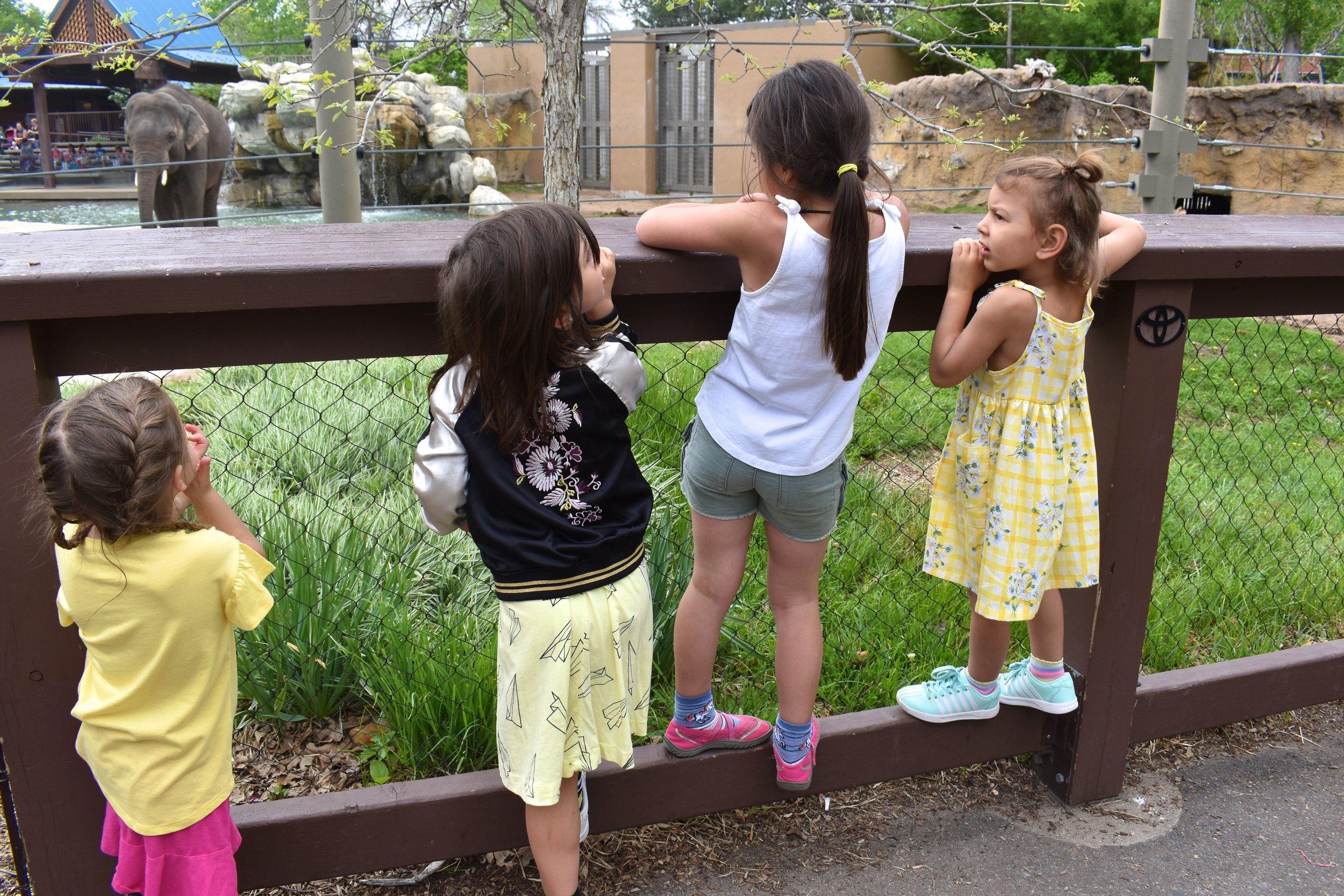 Denver Zoo day 11.jpg