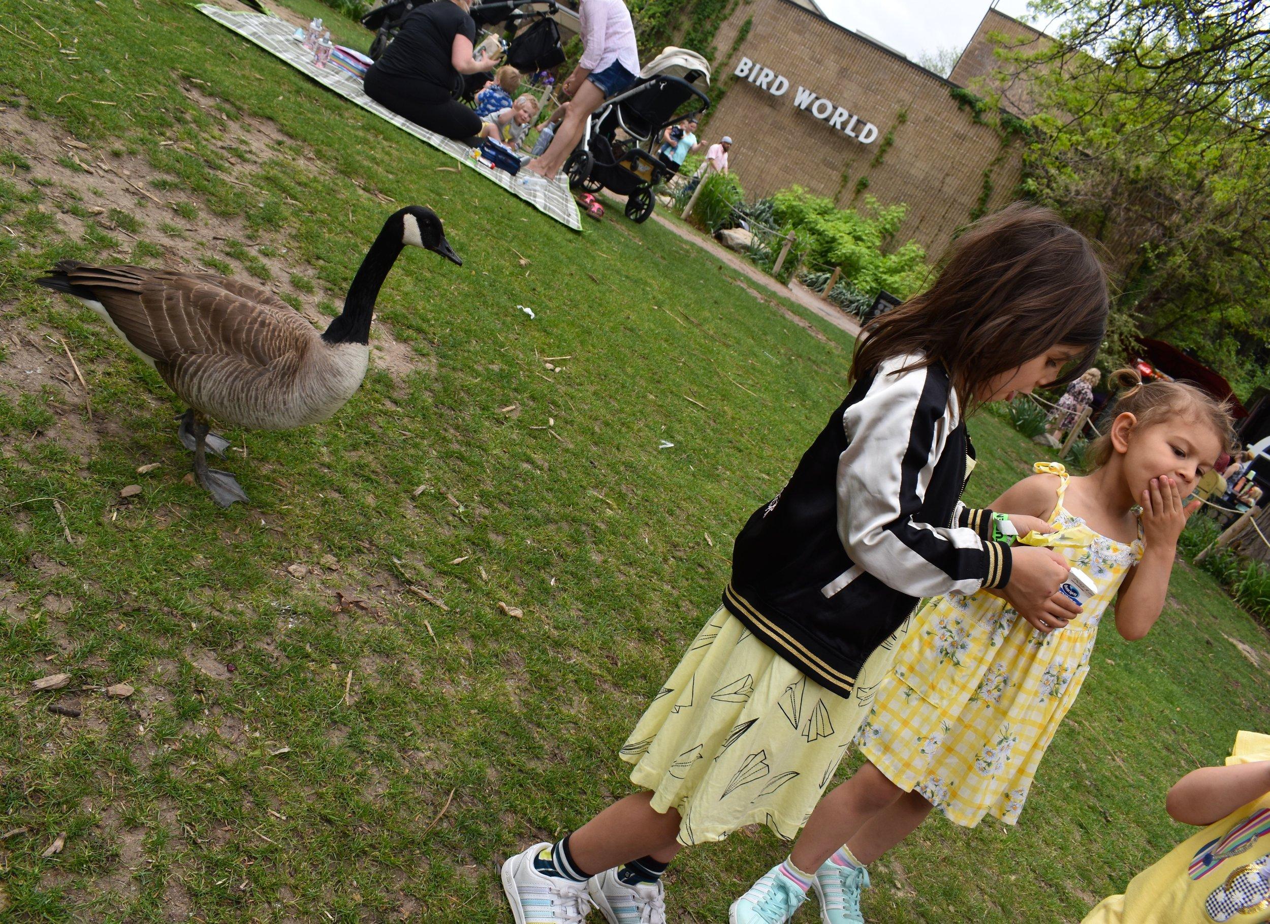 Denver Zoo day 17.jpg