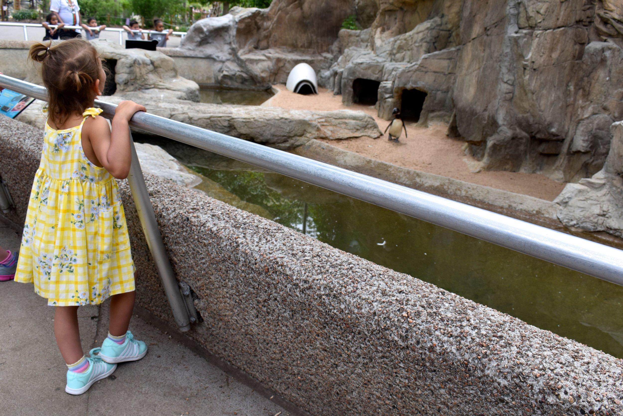 Denver Zoo day 18.jpg