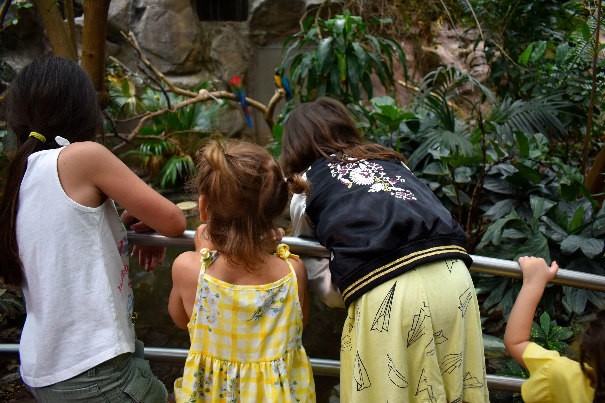 Denver Zoo day 21.jpg